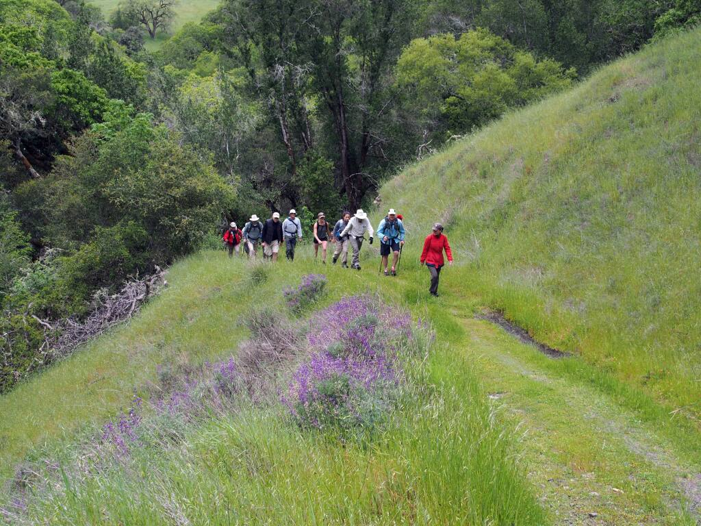 A line of hikers on the trails of follow the lead of Bill and Dave's Hikes through wildflower season in the Mayacamas. (Photo by John Roney)