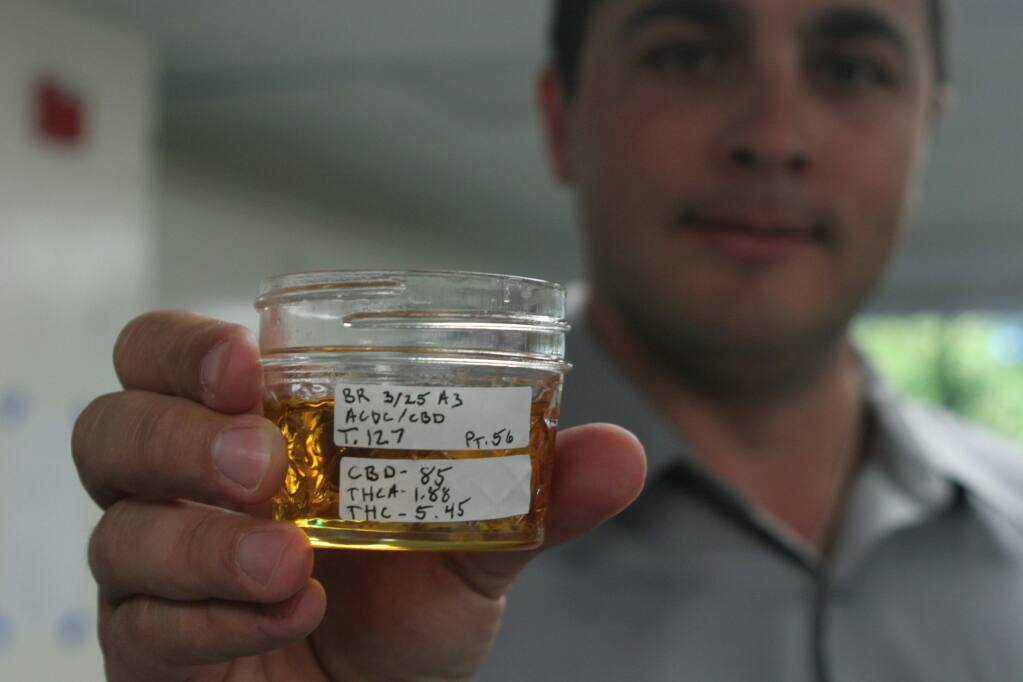 Nick Caston of Santa Rosa's CannaCraft displays a highly refined sample of cannabis oils, identified by the percentage of its components DBC, THCA and THC, at the end of a lengthy process of distillation and purification of medical cannabis. (Christian Kallen / Sonoma Index-Tribune)