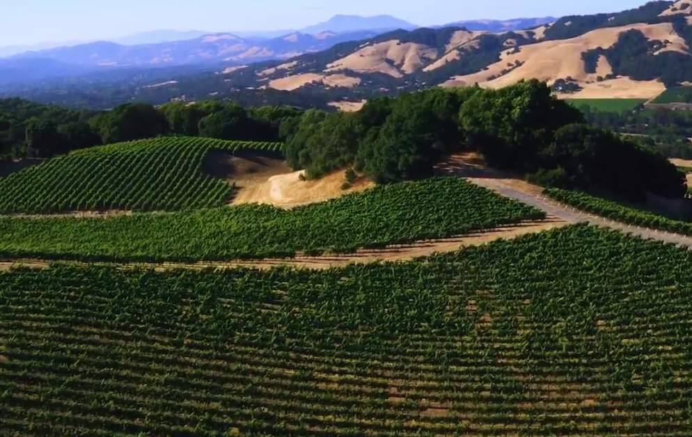A screenshot from a YouTube video by 2016 Jackson Family Wines showing the Jackson Park vineyard, where a worker died in an ATV crash on Tuesday, May 16, 2019. (YOUTUBE)