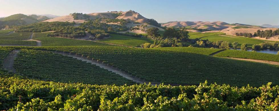 The Los Carneros AVA was established in 1983; it's known for its exquisite pinots noir and chardonnay.