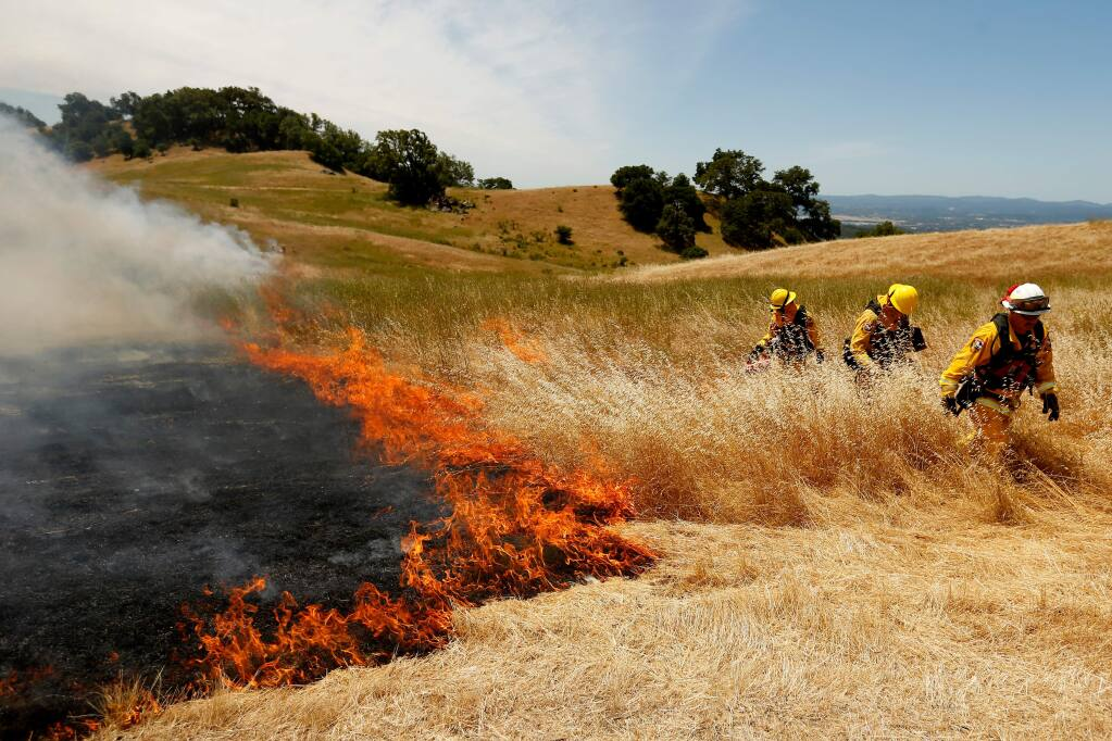 Cal Fire battalion chief Mark Gradek, right, and firefighters Casey Stone, and Chris Idiart set strips of dry grass alight with a drip torch during a 7-acre prescribed burn being used to mitigate the invasive Medusahead grass species and reduce excess dry fuels in the area at Pepperwood Preserve in Santa Rosa, California on Friday, June 10, 2016. (Alvin Jornada / The Press Democrat)