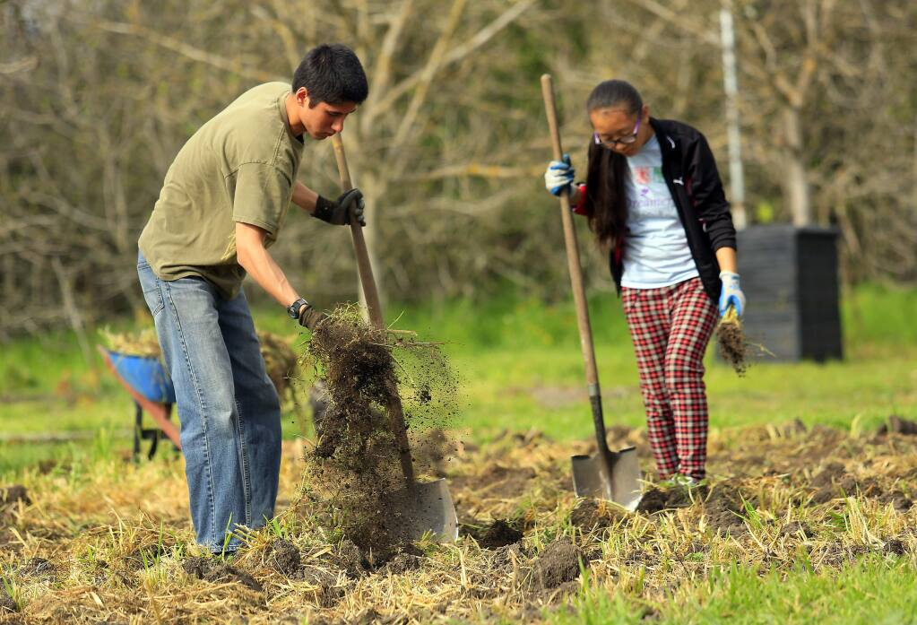 Gage Osborne, 17, left, and Lhakpa Sherpa, 16, remove large clumps of grass from a future vegetable bed. Students in the Enviro-Leaders program learn about sustainable agriculture and environmental restoration working in the Sonoma Garden Park (Photo by John Burgess/The Press Democrat)