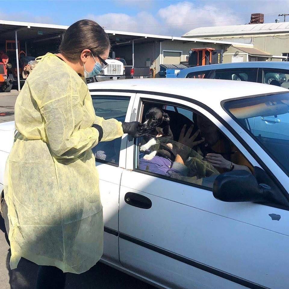 North Bay Animal Services is offering drive-through vaccinations at the Petaluma Animal Shelter.