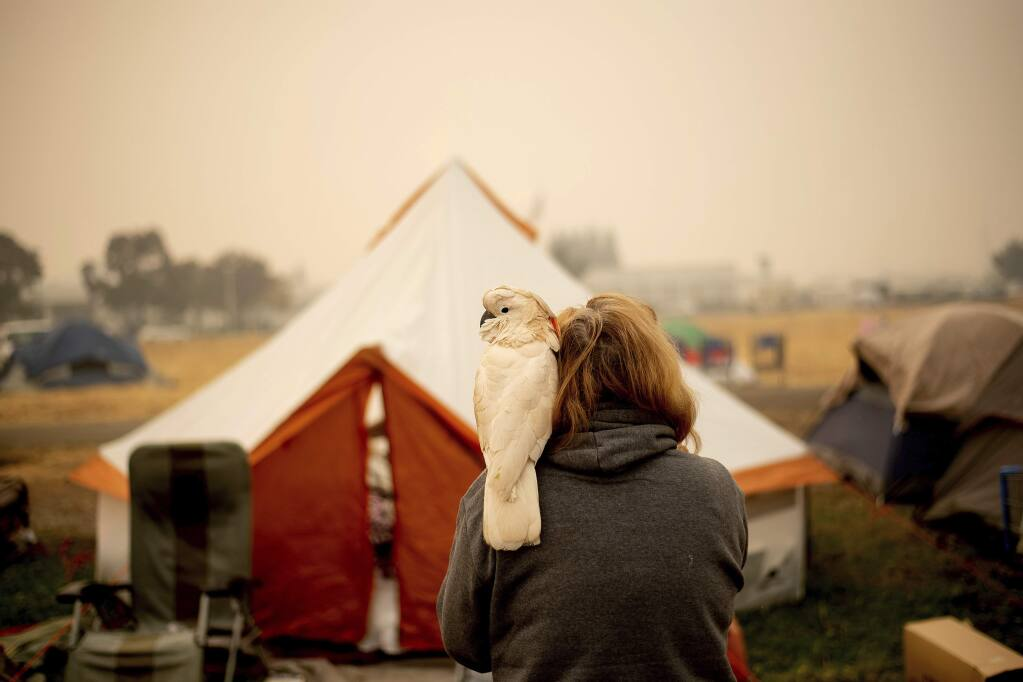 Suzanne Kaksonen, an evacuee of the Camp Fire, and her cockatoo Buddy camp at a makeshift shelter outside a Walmart store in Chico, Calif., on Wednesday, Nov. 14, 2018. Kaksonen lost her Paradise home in the blaze. (AP Photo/Noah Berger)