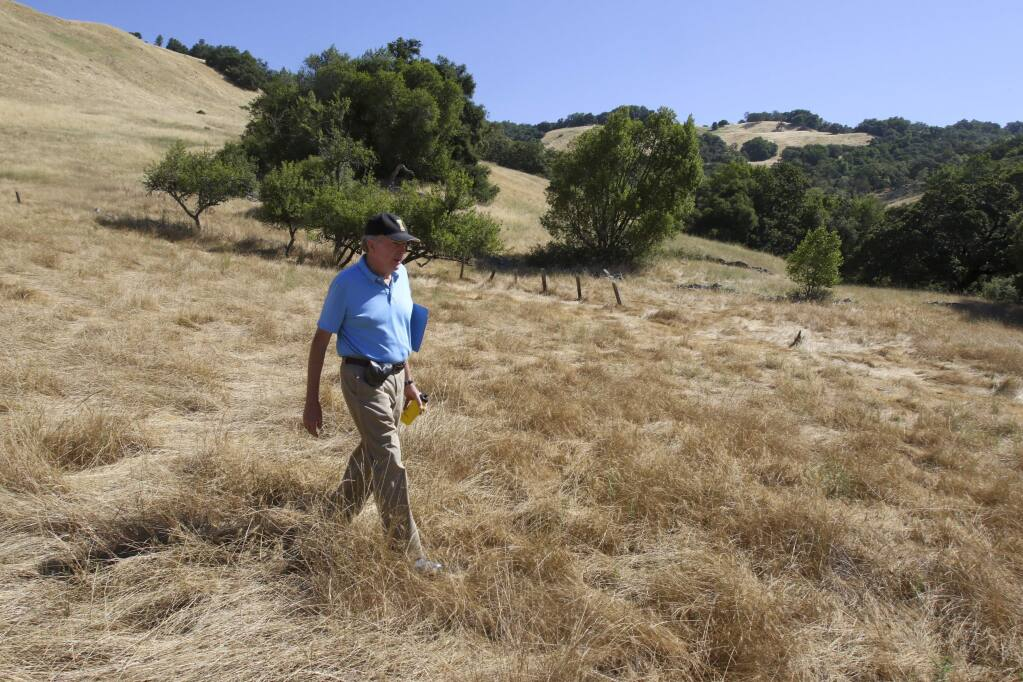 Petaluma City Council Member Mike Healy walks through tall grass as he leads a tour of Lafferty Ranch on Monday morning July 3, 2017. Scott Manchester/For The Argus-Courier