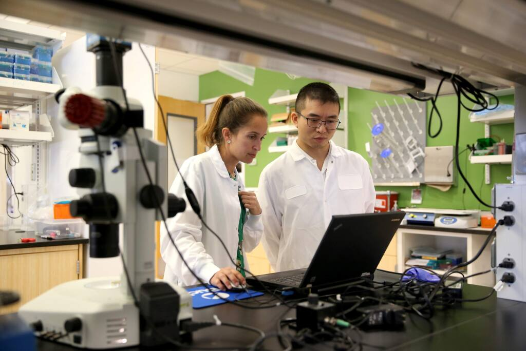 Research associate Heather Tanner and postdoctoral research fellow Hao Yan work on installing software to view a developing reproductive cell from a mouse's ovary at the Center for Female Reproductive Longevity and Equality at the Buck Institute for Research on Aging in Novato, California on Monday, September 30, 2019. (BETH SCHLANKER/The Press Democrat)