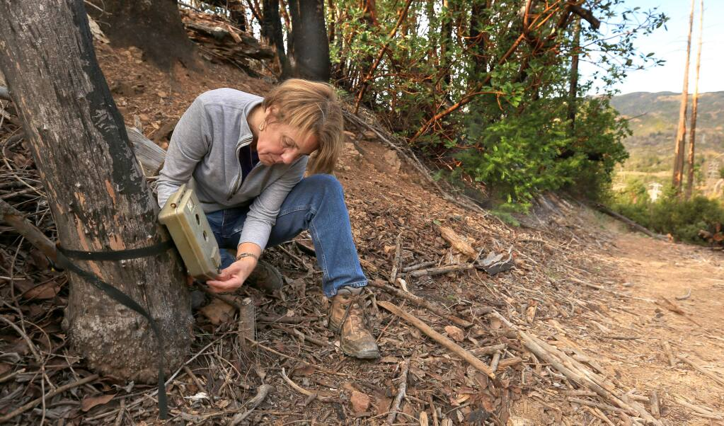 Virginia Fifield is a volunteer with the Modini Mayacamas Preserves, totaling about 3,000 acres off Pine Flat Road. Fifield maintains several wildlife cameras on the preserves. She removes the card reader once a month or so to check the animal activity. (Kent Porter / The Press Democrat)
