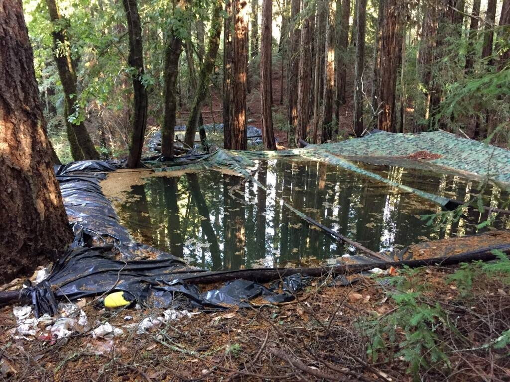 Photos by Catherine Lantosca, 2016An illegal cannabis farm was found at Cresta Ranch. Three irrigation ponds were constructed at the grow site.