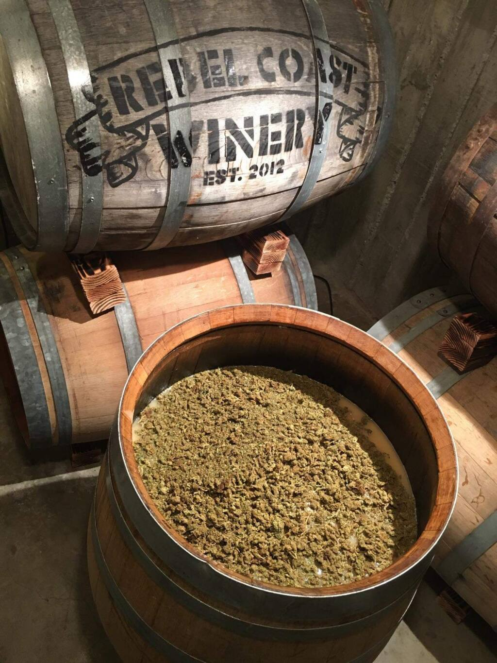 Rebel Coast Wine infuses a Sonoma Valley sauvignon blanc with oganic sativa flowers to create a 'green wine' which they hope to market widely in the state next year. (Chip Forsythe)