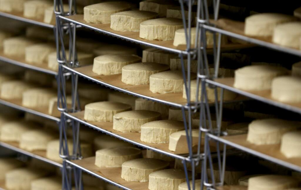 Cheese wheels age in the cooler at Miyoko's Creamery in Petaluma on Monday, Dec. 23, 2019. (BETH SCHLANKER/ The Press Democrat)