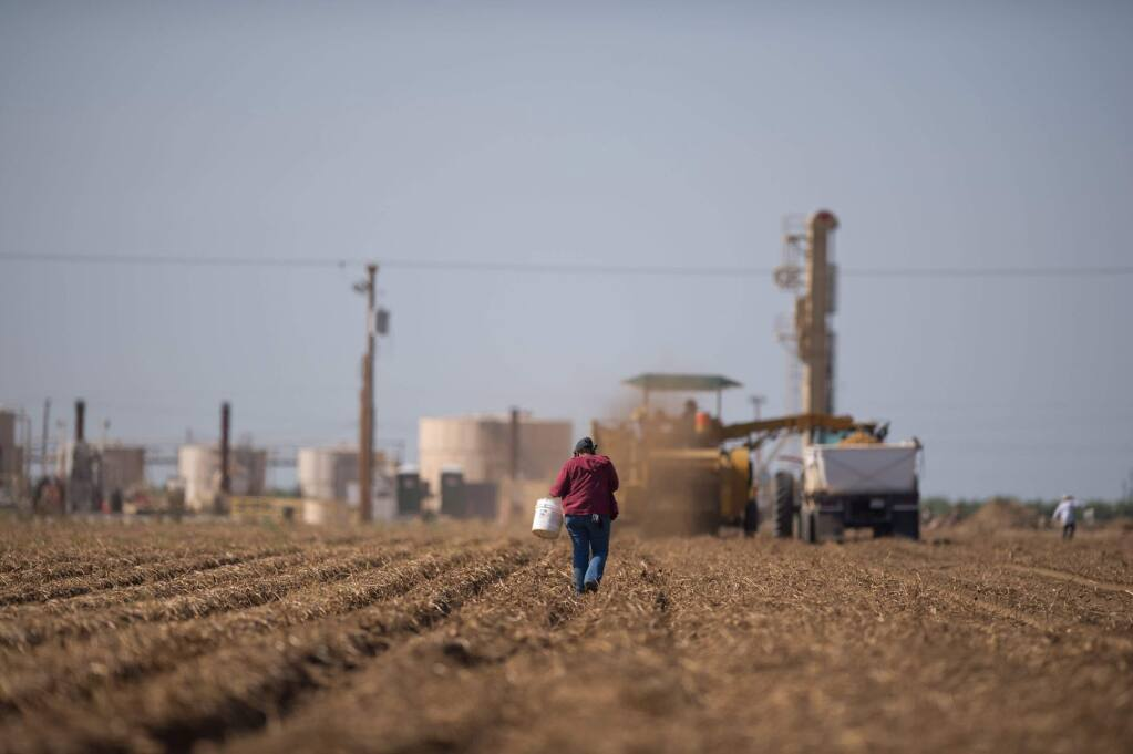 A fracking facility with working wells sit as a backdrop to fieldworkers picking up potatoes in Shafter. (JOSE LUIS VILLEGAS/ Sacramento Bee, 2013)