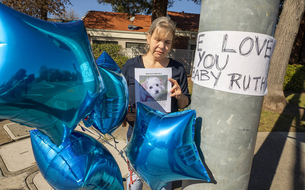 Susan Standen holds up a photo of her dog Baby Ruth, who was attacked and killed last Saturday by a pit bull that jumped from a car at the corner of Summerfield Road and Hoen Avenue in Santa Rosa. (John Burgess/The Press Democrat)