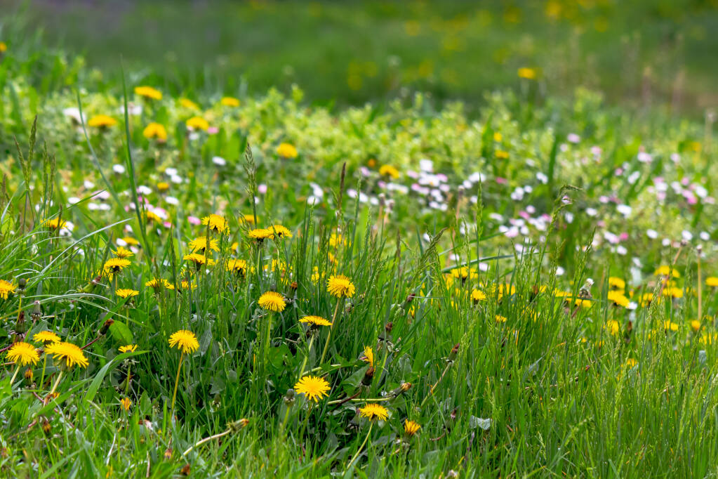 You can control weeds without chemicals. (Mike Pellinni/ Shutterstock)