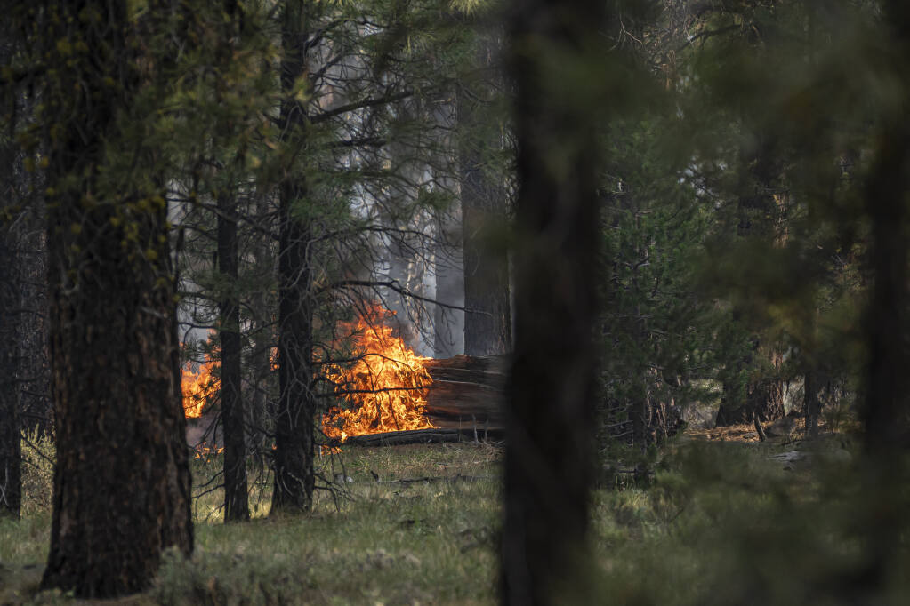 Spot fires burn near trees damaged by the Bootleg fire on Thursday, July 22, 2021, in Paisley, Ore. (AP Photo/Nathan Howard)