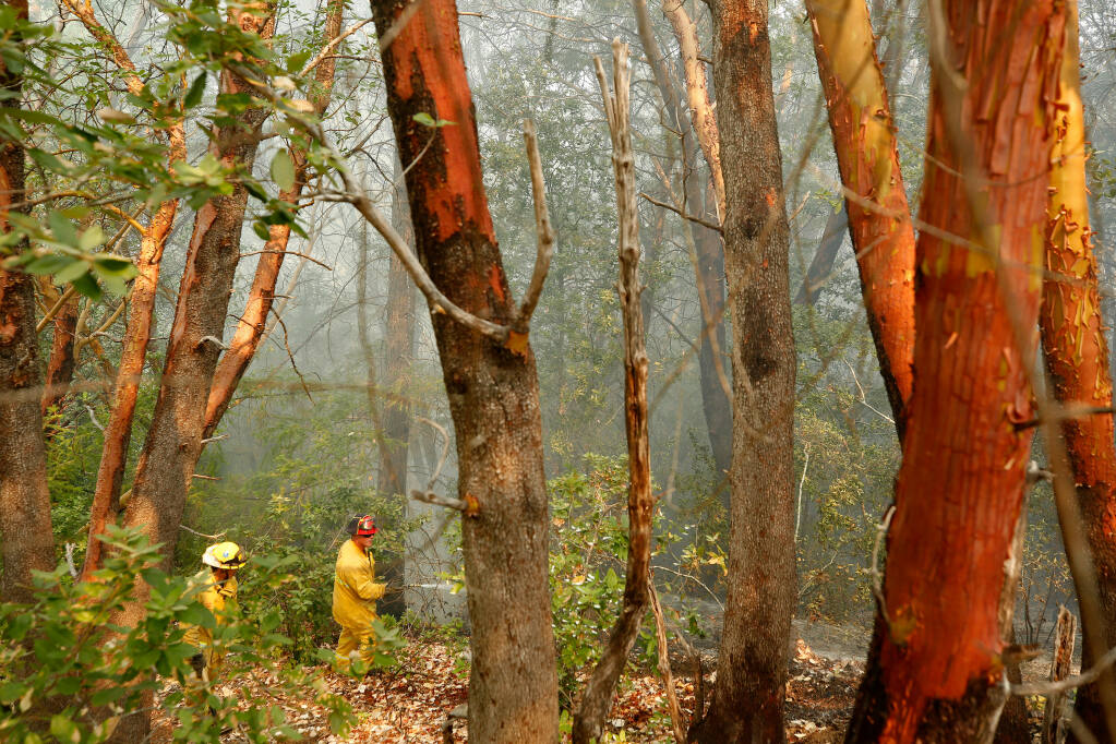 Gilroy fire captain Shaun Peyghambary, right, and firefighter Will Nguyen extinguish hot spots in a thick grove of  trees during the Walbridge fire on Stewarts Point-Skaggs Springs Road in Healdsburg, California, on Saturday, Aug. 22, 2020. (Alvin A.H. Jornada / The Press Democrat)