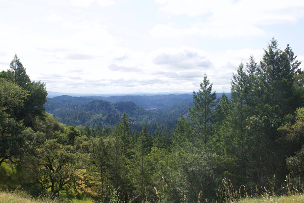 The Redwoods from Cazadero have been logged and turned into the houses of San Francisco, Berkeley and more. Photo provided.