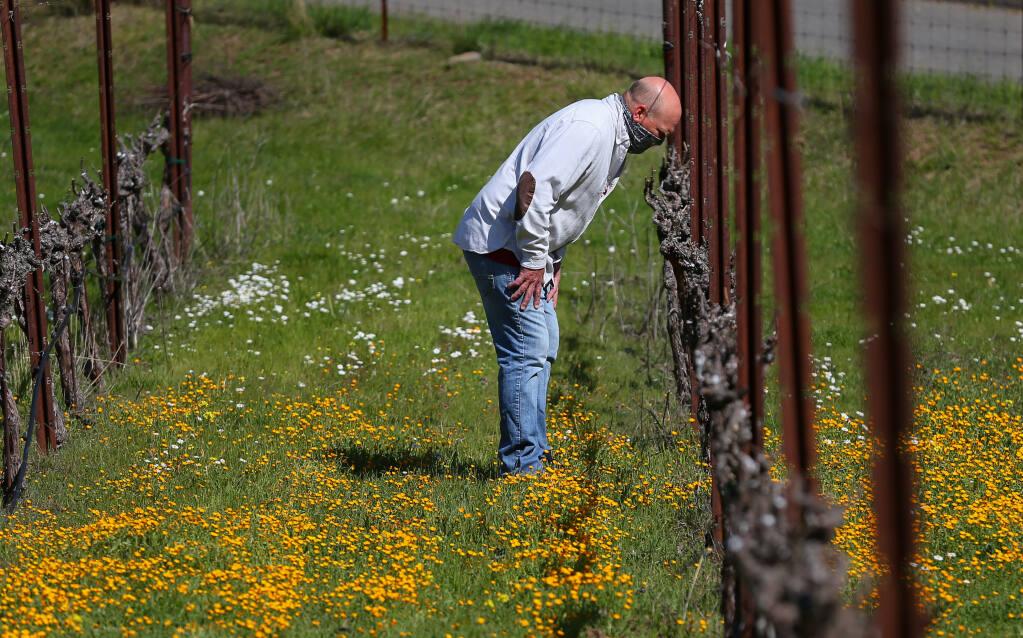 Paradise Ridge Winery co-owner Rene Byck looks for bud break among the Nagasawa vineyard chardonnay vines in Santa Rosa on Thursday, March 4, 2021.  (Christopher Chung/ The Press Democrat)