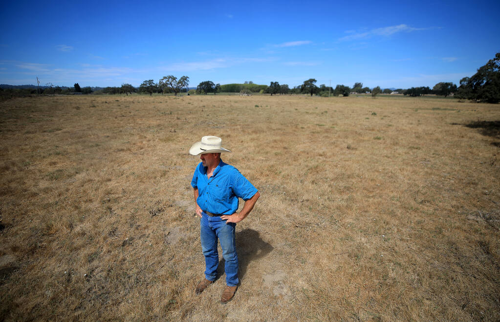 Doug Beretta was told there would be no water restrictions on wastewater to irrigate his cattle pastures, but in June, a 30% cap was put on his usage from the Laguna waste water plant. He waters fields three days a week and most are turning brown due to the hot summer days and below average rainfall, Friday, August 14, 2020 in Santa Rosa. (Kent Porter / The Press Democrat) 2020