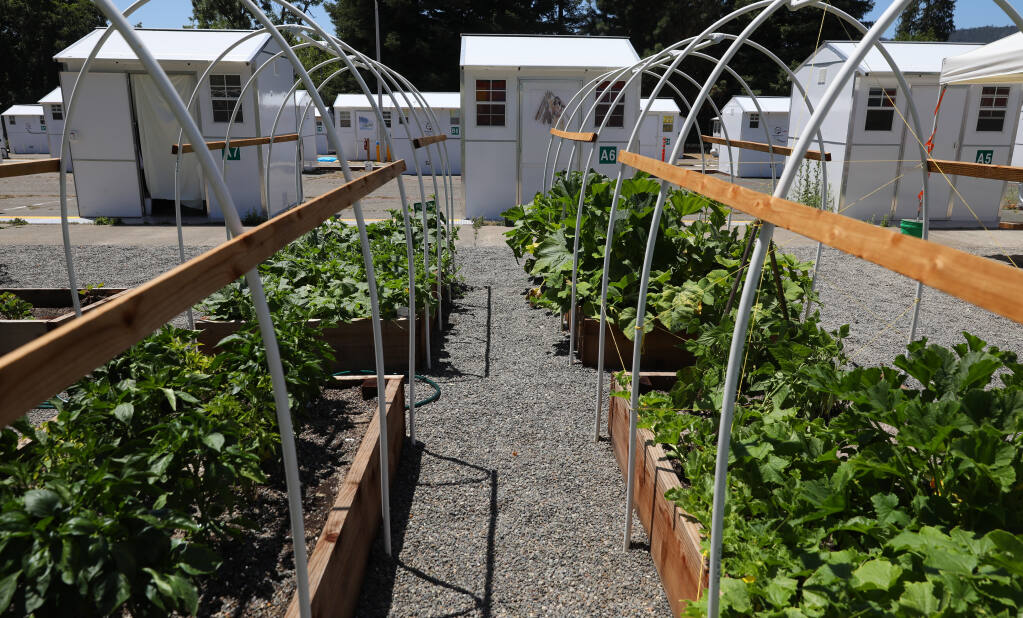 Residents at the Los Guilicos Village outdoor homeless shelter in Santa Rosa are able to grow and harvest vegetables at the camp. (Christopher Chung/The Press Democrat)