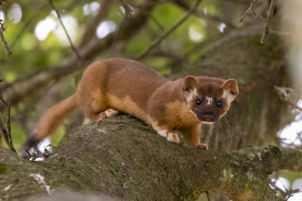 How one Santa Rosa photographer captures wildlife on camera
