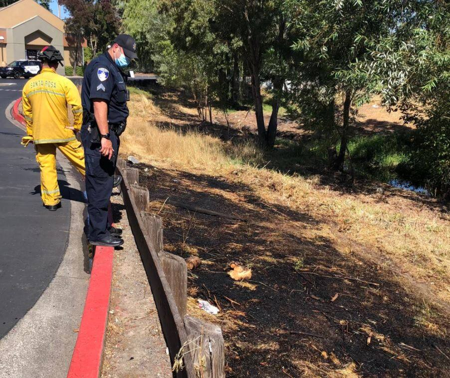 A man was arrested on suspicion of burning a  patch of grass behind the Bay Village Shopping Center in Santa Rosa  on Saturday, Sept. 11, 2021. (Santa Rosa Police Department)