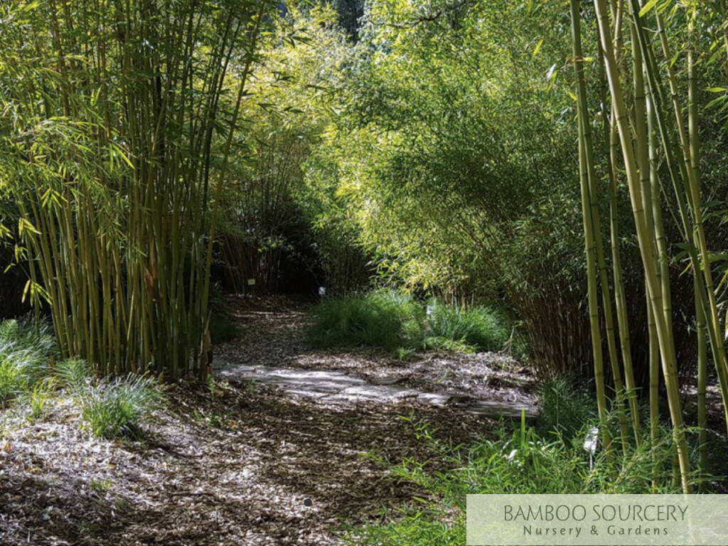 Bamboo Sourcery