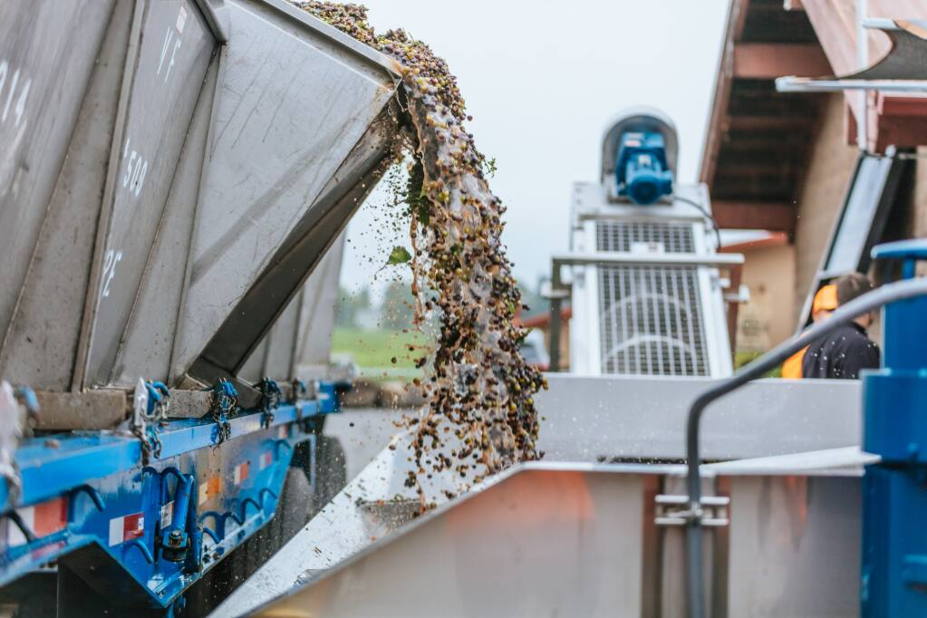 Some of the first wine grapes of the 2021 North Coast crush arrive at custom sparkling winery Rack & Riddle in Healdsburg on Tuesday, Aug. 3, 2021. (Destination Films photo)